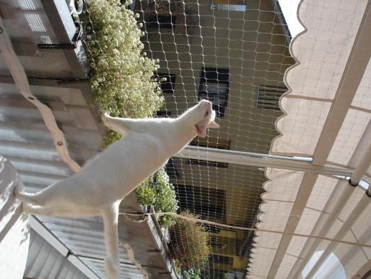 Recinzione Giardino Per Gatti.Recinzione Giardino Per Gatti Recintare Un Giardino Images Come